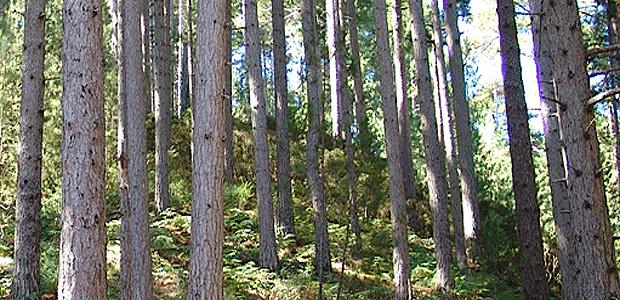 Filière forêt-bois : La Corse dans la certification PEFC