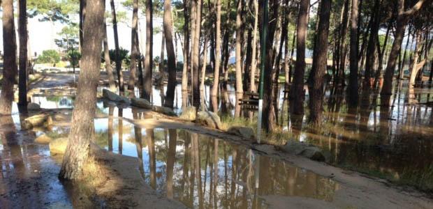 La pinède de Calvi inondée