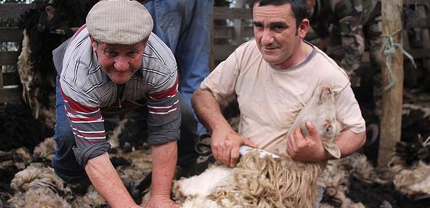 Tradition ancestrale avec a tundera dans la plaine d'Aregnu