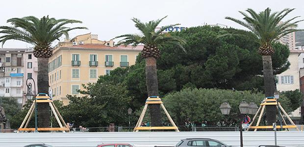 Durant le transfert des palmiers du square César Campinchi, le stationnement sera interdit du 15 au 18 mai dans plusieurs secteurs de la ville. (Photo d'archive Marilyne Santi)