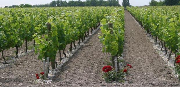 Le premier plan collectif de restructuration - de bassin Bordeaux-Aquitaine - a été adopté en février.