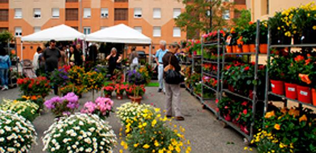 Ghisonaccia : Succès du marché aux fleurs
