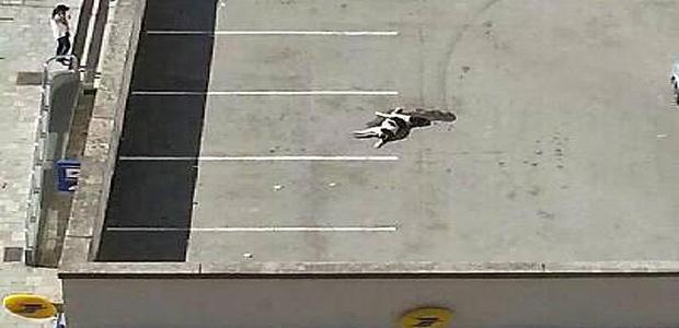Ajaccio : Un chien attaché et traîné par une moto