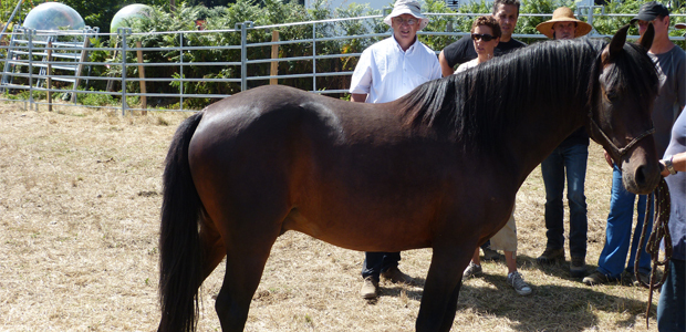Cavallu Corsu : Le palmarès du concours national