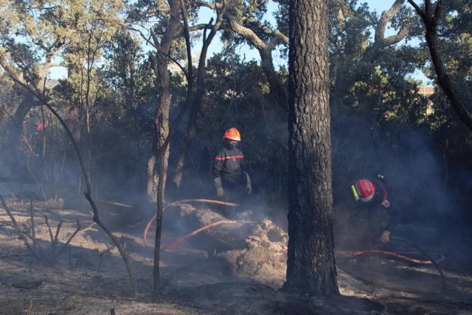 Porto-Vecchio : un incendie parcourt plus de 5 hectares