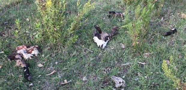 Animaux massacrés à ferme de Padula : L'appel à l'aide de Lætitia Mannoni