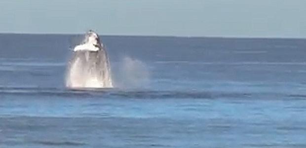 La vidéo du jour : Les baleines font la fête
