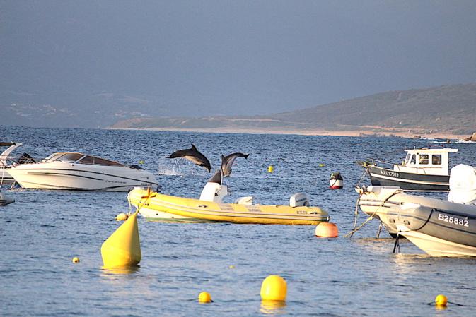 La photo du jour : les dauphins de Campumoru