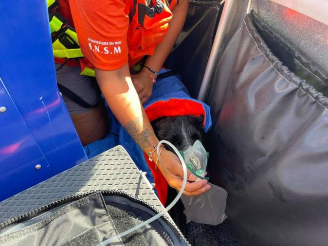Golfe du Valinco : la SNSM de Pruprià sauve un chien de la noyade