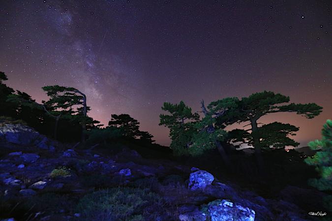 La photo du jour : Les pins Laricio de Bavella sous la Voie lactée