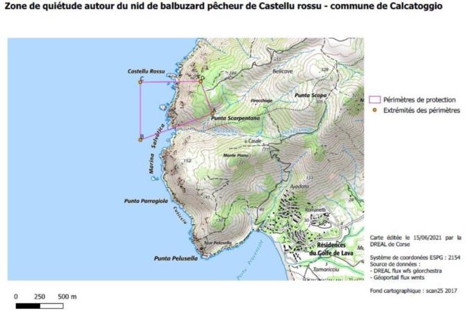 Balbuzard pêcheur de Corse : nouveaux périmètres de protection