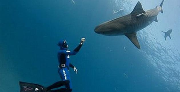 Pierre Frolla, l'homme qui plonge avec les requins, à Santa Giulia