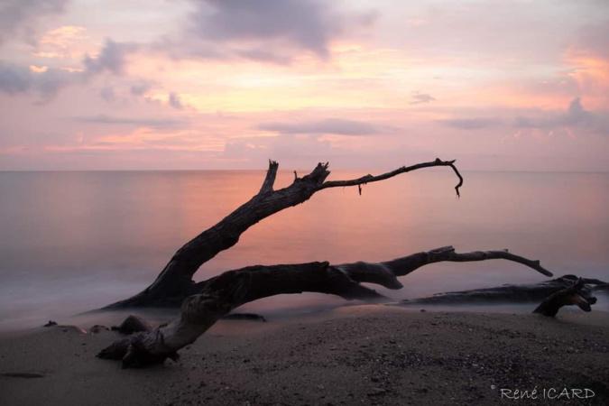 La photo du jour : lever de soleil rose à la Marana