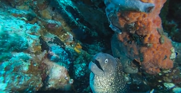 Stéphan Le Gallais : Balade sous-marine à La Revellata
