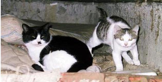 Ajaccio : Une campagne de capture des chats errants du 4 au 20 novembre