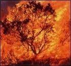 Départ de feu sur la Balanina