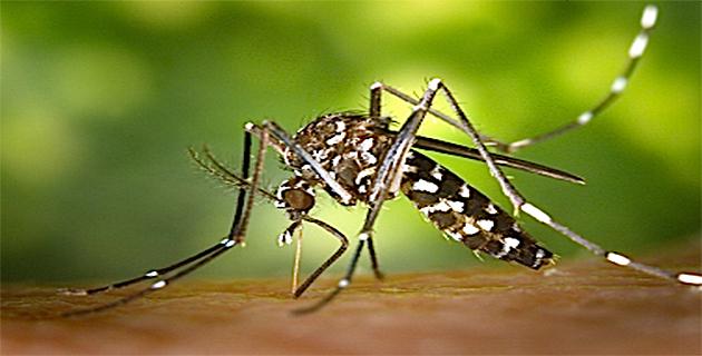 Moustique, se protéger et éviter sa prolifération