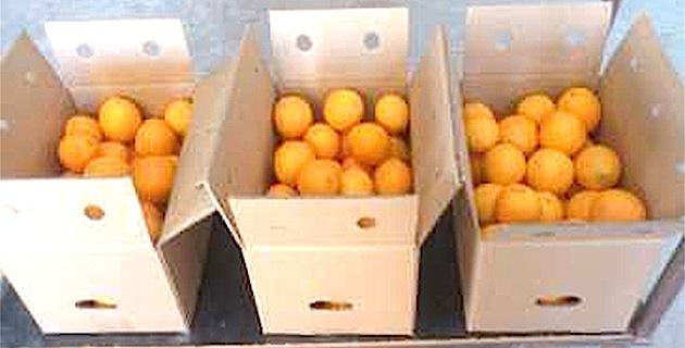 """Fruits et légumes d'Espagne et d'Italie : La FDSEA de Corse dénonce """"les grandes et moyennes surfaces et certains grossistes"""""""