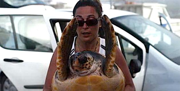 Un réseau d'alerte tortues marines en Corse