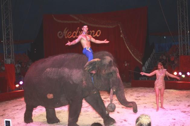 "Calvi : La ""première"" des 20 ans du cirque Medrano en Corse"