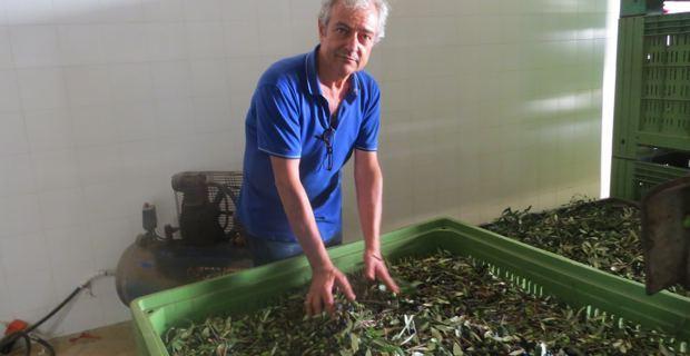 Enzo Manni, responsable de la coopérative ACLI qui, à Racale, dans la province de Lecce, regroupe près de 600 producteurs.