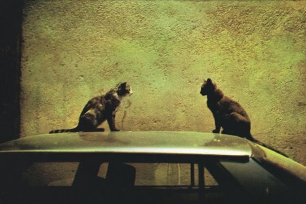 """LES DEUX CHATS LA NUIT, RUE SAINT-ROCH A BASTIA - Extrait de la série """"La ville, la nuit"""", 1998. Collection du Centre Méditerranéen de la Photographie - Dolorès Marat"""