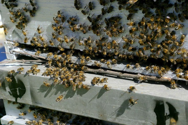 Vols récurrents de ruches en Corse : Les technologies de géolocalisation au service des apiculteurs