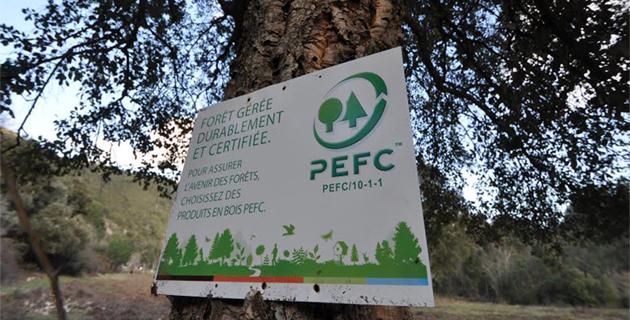 Certification forestière : La démarche se développe en Corse
