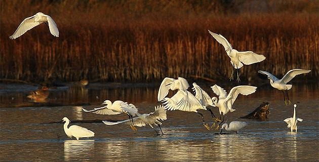 www.oiseauxdecorse.fr