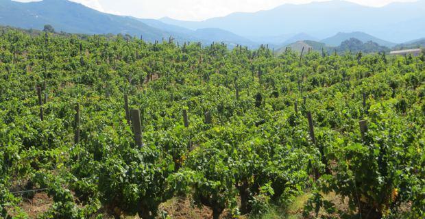 La route des vins de Provence : Un rempart contre la spéculation foncière et immobilière !