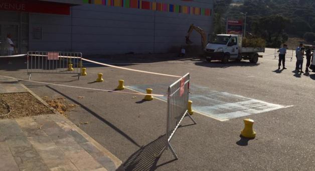 Xylella Fastidiosa à Propriano : Plus de 50 prélèvements ont été effectués à proximité de la zone infectée