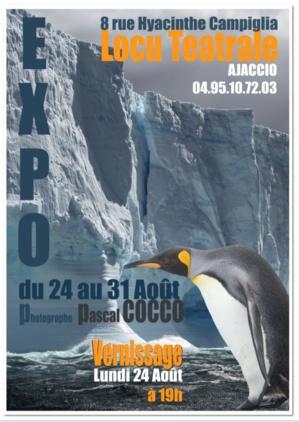 """""""En territoire du manchot royal"""" : Exposition du 24 au 31 Août à Locu Teatrale"""