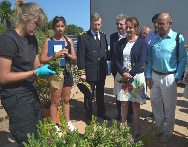 Xylella fastidiosa : Ségolène Royal favorable à la création d'une filière horticole