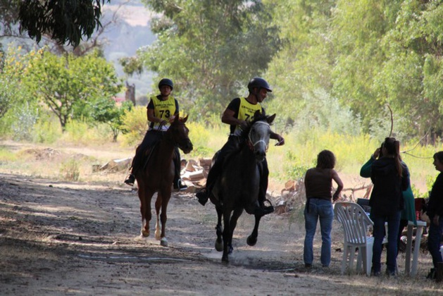 Endurance équestre Calvi-Calenzana : Victoire en 90 km de Nathalie Trojani