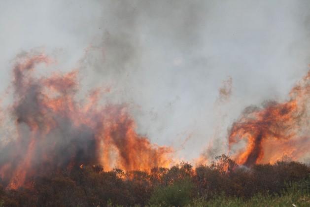 Incendie à Vivario : 5 000m2 de maquis détruit