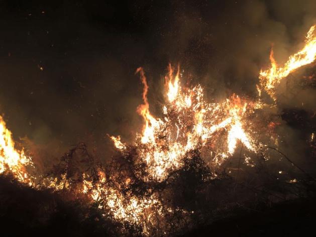 Linguizzetta : Un incendie détruit un hectare de maquis