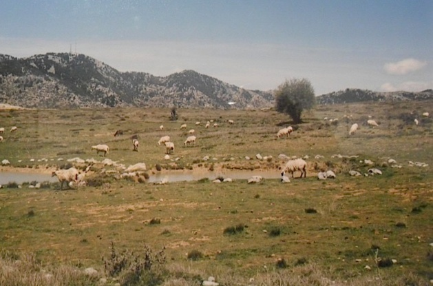 """""""Plateau d'Omalos, département de la Canée"""", Crète 2014 - Maddalena Rodriguez-Antoniotti"""