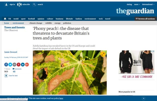 Xylella phobie au Royaume-Uni