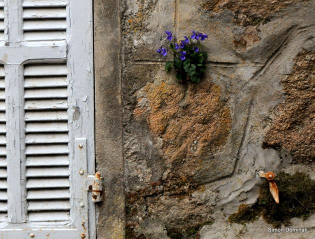Serra-di-Scopamèna : Une jolie rencontre
