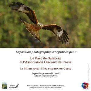 L'Ile-Rousse : '' Le Milan royal et les oiseaux en Corse'' s'exposent au Parc de Saleccia