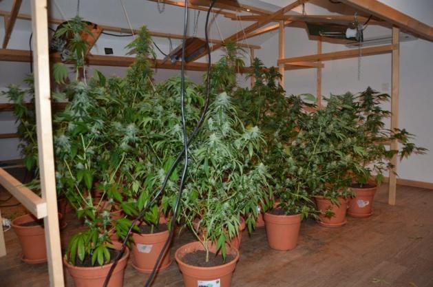Les pots de cannabis  étaient cultivés dans un appartement de Bastia