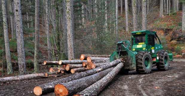 Legnu Vivu : La filière forêt-bois, une filière d'avenir fortement créatrice d'emplois