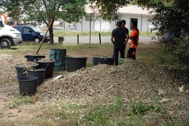 Grand-Ajaccio : Le CPIE procède à une expérience de broyage des déchets verts