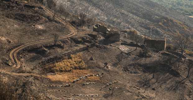 Poghju d'Oletta après le passage du feu.