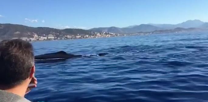 Ajaccio : Quand le cachalot a rendez-vous avec Isula Plongée