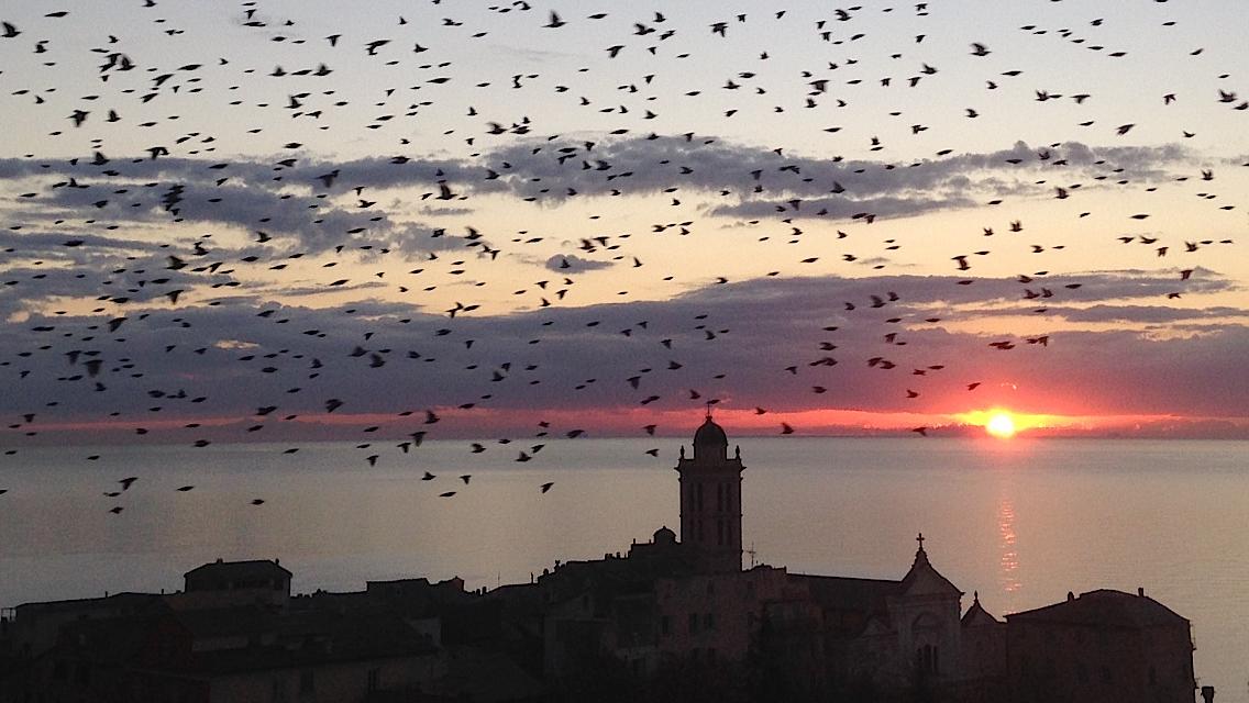 Bastia : Un vol de culombi sur la ville