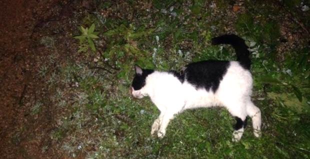 Chats et chiens empoisonnés à Calvi !