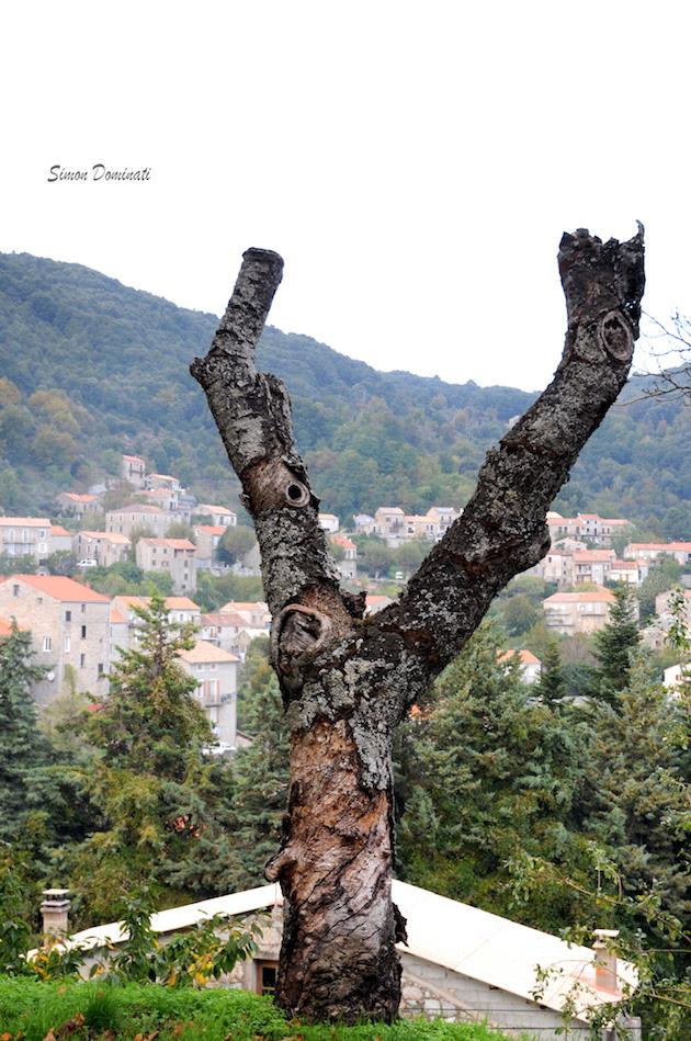 « Le gibbon mâle de Carianonu » (Quartier de Lévie)