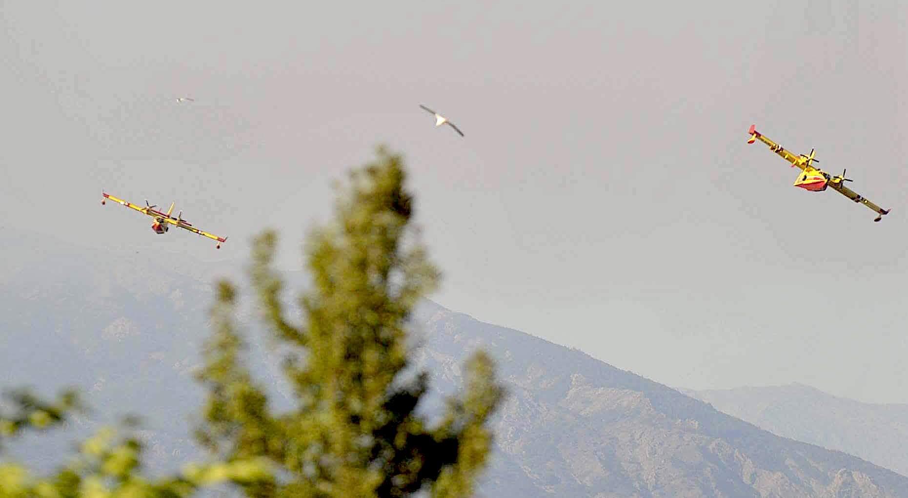 L'image du jour : Le goéland comme les Canadair