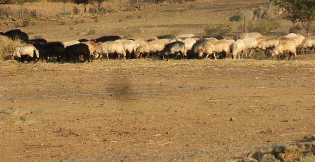 Sécheresse : Les agriculteurs sur le pied de guerre réclament des mesures d'urgence pour irriguer leurs cultures